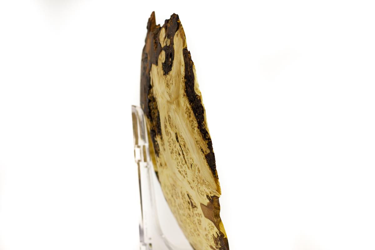 Flache Schale aus einer Silberahorn Maserknolle